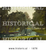 Historical Photochrom of Swans and Pond at Hampton Court Park by Al
