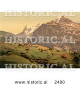 Historical Photochrom of the Village of Murren in Switzerland by Al
