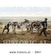 Historical Photochrom of Two Boys Trying to Budge a Stubborn Donkey on a Beach in England by Al