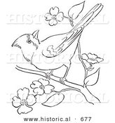 Historical Vector Illustration Of A Cardinal On Tree Branch With Blossoms