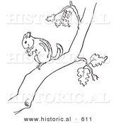 Historical Vector Illustration of a Chipmunk Holding a Nut in a Tree - Outlined Version by Al