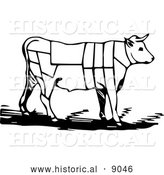 Historical Vector Illustration of a Cow Featuring Outlined Butcher Sections of Bullock - Black and White by Al