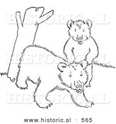 Historical Vector Illustration of a Cub Bears Playing by a Tree Trunk - Outlined Version by Al
