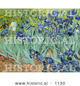 Historical Vector Illustration of a Flower Bed of Irises - Vincent Van Gogh Painting by Al