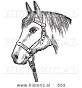 Historical Vector Illustration of a Horse with Good Form Wearing a Halter - Black and White Version by Al