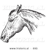 Historical Vector Illustration of a Horse's Anatomy Featuring a Bad Head from the Side - Black and White Version by Al