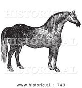 Historical Vector Illustration of a Horse's Right Side - Black and White Version by Al