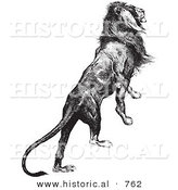 Historical Vector Illustration of a Majestic Lion Climbing up - Black and White Version by Al