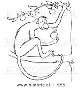Historical Vector Illustration of a Monkey Eating an Apple from a Tree - Outlined Version by Al