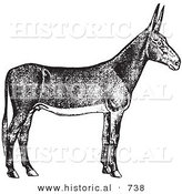 Historical Vector Illustration of a Poitou Donkey - Black and White Version by Al