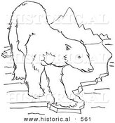 Historical Vector Illustration of a Polar Bear Walking on to a Small Piece of Ice - Outlined Version by Al
