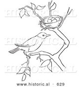 Historical Vector Illustration Of A Robin On Tree Branch By Its Nest