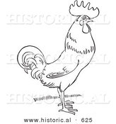 Historical Vector Illustration of a Rooster Standing and Staring - Outlined Version by Al