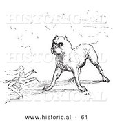 Historical Vector Illustration of a Tough Guard Dog Staring - Black and White Version by Al