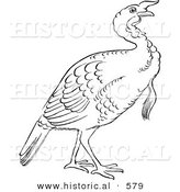 Historical Vector Illustration of a Turkey Bird Standing and Staring - Outlined Version by Al