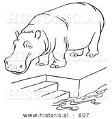 Historical Vector Illustration of a Zoo Hippo Standing on a Pool Platform with Stairs Leading to Water - Outlined Version by Al