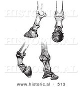 Historical Vector Illustration of Engravings Featuring Horse Bones and Articulations of the Foot and Hoof - Black and White Version by Al