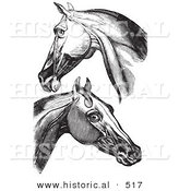 Historical Vector Illustration of Engravings Featuring Horse Head and Neck Muscles - Black and White Version by Al
