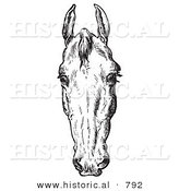Historical Vector Illustration of Horse Anatomy Featuring a Bad Head 2 - Black and White Version by Al