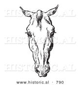 Historical Vector Illustration of Horse Anatomy Featuring a Bad Head 3 - Black and White Version by Al