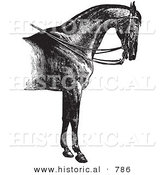 Historical Vector Illustration of Horse Anatomy Featuring a Reined Horse with Good Shoulders - Black and White Version by Al
