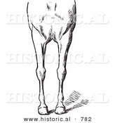 Historical Vector Illustration of Horse Anatomy Featuring Bad Conformations of the Fore Quarters 3 - Black and White Version by Al