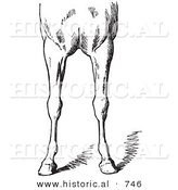 Historical Vector Illustration of Horse Anatomy Featuring Bad Conformations of the Fore Quarters 4 - Black and White Version by Al