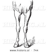Historical Vector Illustration of Horse Anatomy Featuring Bad Conformations of the Fore Quarters 5 - Black and White Version by Al