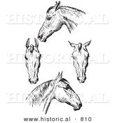 Historical Vector Illustration of Horse Anatomy Featuring Bad Heads - Black and White Version by Al