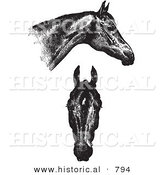 Historical Vector Illustration of Horse Anatomy Featuring Good Heads - Black and White Version by Al