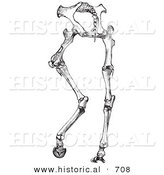 Historical Vector Illustration of Horse Anatomy Featuring Hinder Part Bones - Black and White Version by Al