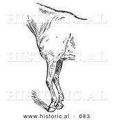 Historical Vector Illustration of Horse Anatomy Featuring the Bad Conformation of Fore Quarters from the Side - Black and White Version by Al