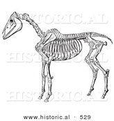 Historical Vector Illustration of Horse Anatomy Featuring the Skeleton from Side Without Flesh - Black and White Version by Al