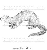 Illustration of a Fisher - Black and White by Al