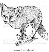 Illustration of a Red Fox Posing on Plants - Black and White by Al