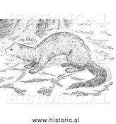 Illustration of a Wild Fisher in the Woods - Black and White by Al