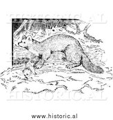 Illustration of a Wild Marten - Black and White by Al
