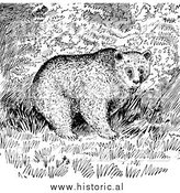 Illustration of Trees Behind Grizzly Bear - Black and White by Al