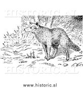 Illustration of Wolf in a Forest - Black and White by Al