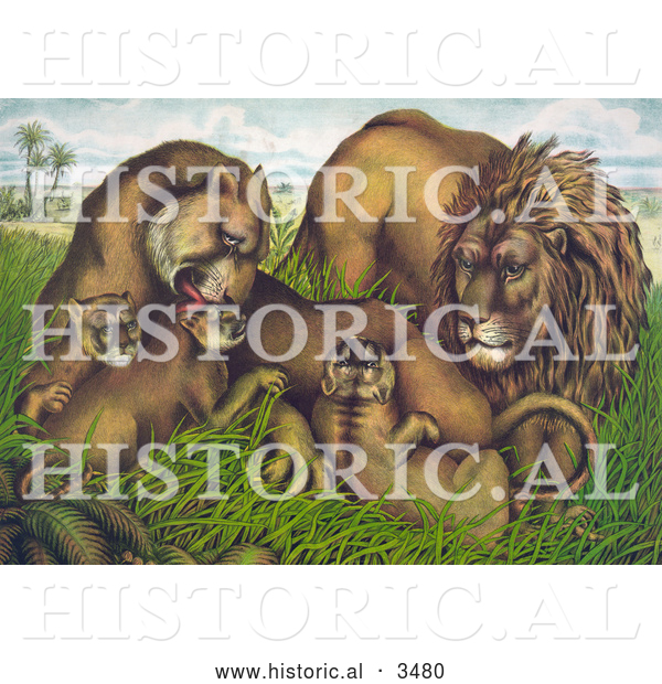Historical Illustration of a Family of Lions in Grass with Babies