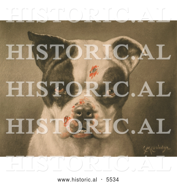 Historical Illustration of a Tough Dog with Bloody Scratches