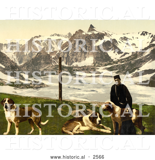Historical Photochrom of a Man with St Bernard Dogs