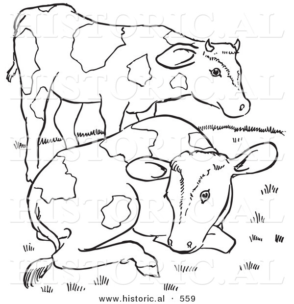 Historical Vector Illustration of 2 Friendly Farm Cows - Outlined Version