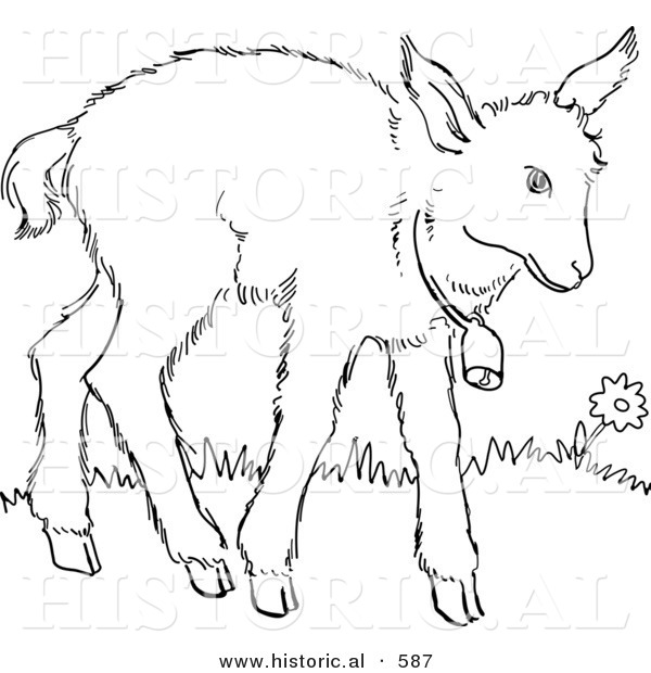 Historical Vector Illustration of a Baby Goat with a Bell Around Neck - Outlined Version