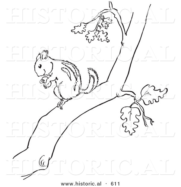 Historical Vector Illustration of a Chipmunk Holding a Nut in a Tree - Outlined Version