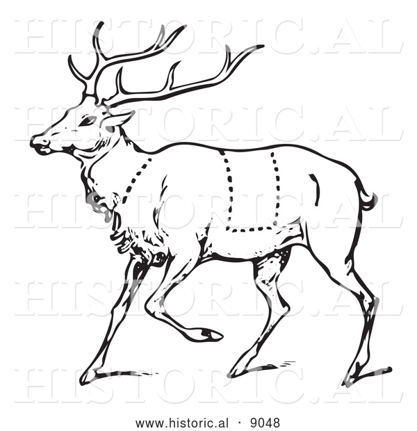 Historical Vector Illustration of a Deer Featuring Outlined Butcher Sections of Venison Cuts - Black and White