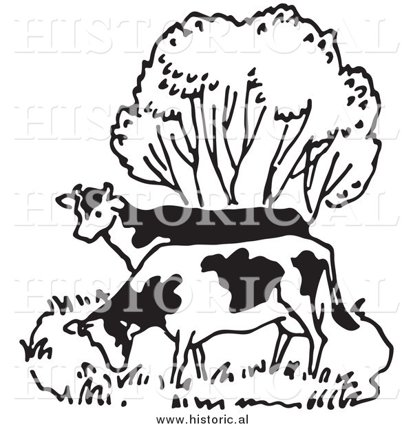 Illustration of a Couple of Cows Grazing Beside a Tree - Black and White