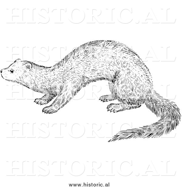 Illustration of a Fisher - Black and White