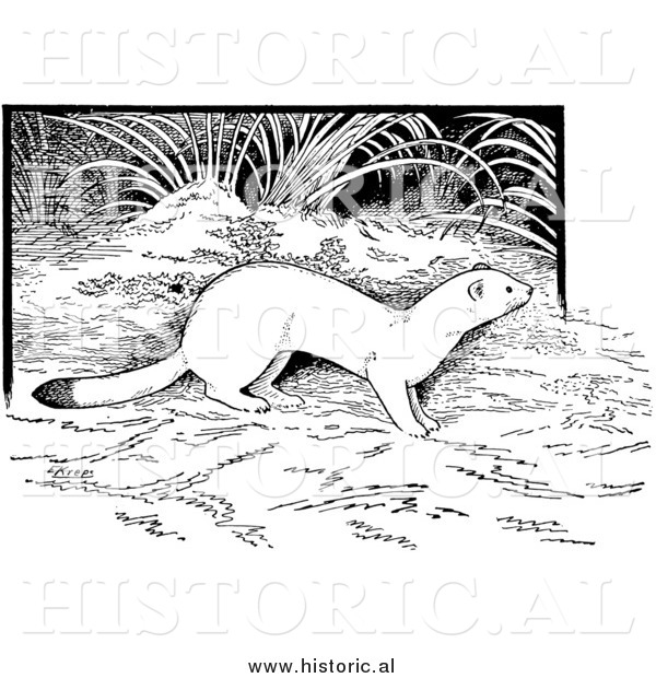 Illustration of a Weasel in the Forest - Black and White