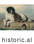 Historical Illustration of a Large Landseer Newfoundland Dog Lying on Cement near Water by JVPD